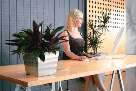 Rentokil consultants guide customers through a three-stage process for interior plantscaping.